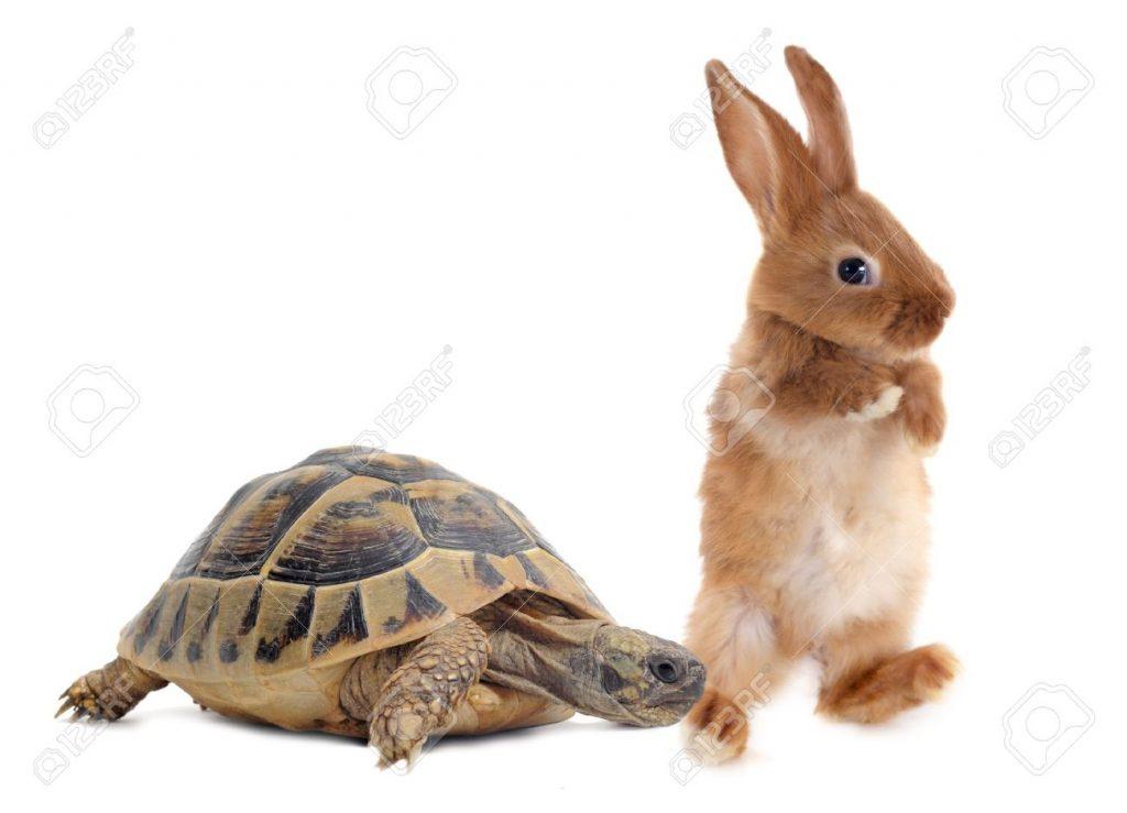Cursă cu trei iepuri şi o ţestoasă / ARGO